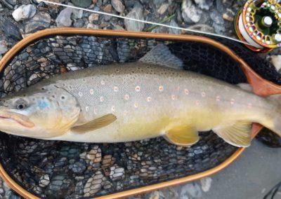 """Yves a pris cette magnifique truite fario lors d'un séjour de pêche en Autriche grâce à une SBN 014."""""""